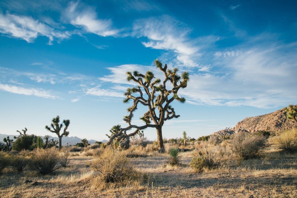 Will God Take Care of Us? Scrub brush in the desert. What if we could take our eyes off of the cracks in the dry ground and see the well of water God has provided?