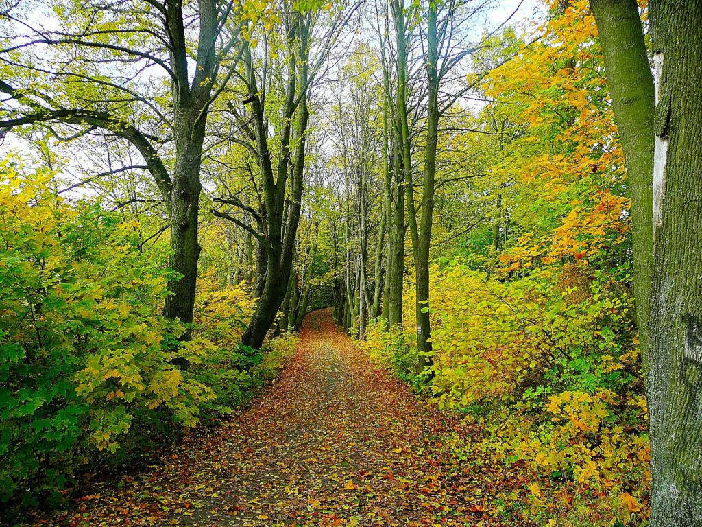What Happens When We Turn to God_path in woods with leaves changing
