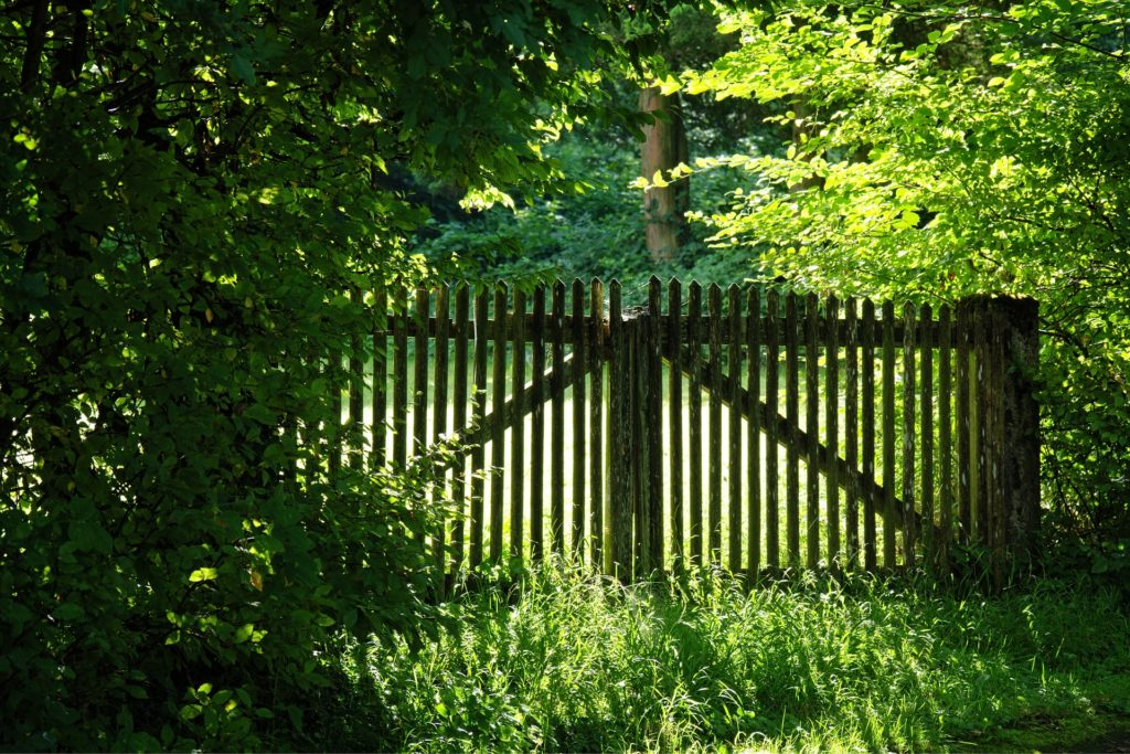 What Everybody Ought to Know About God's Protection_green scene with trees in foreground and background, tall grass in front, narrow-slatted wood fence across the middle