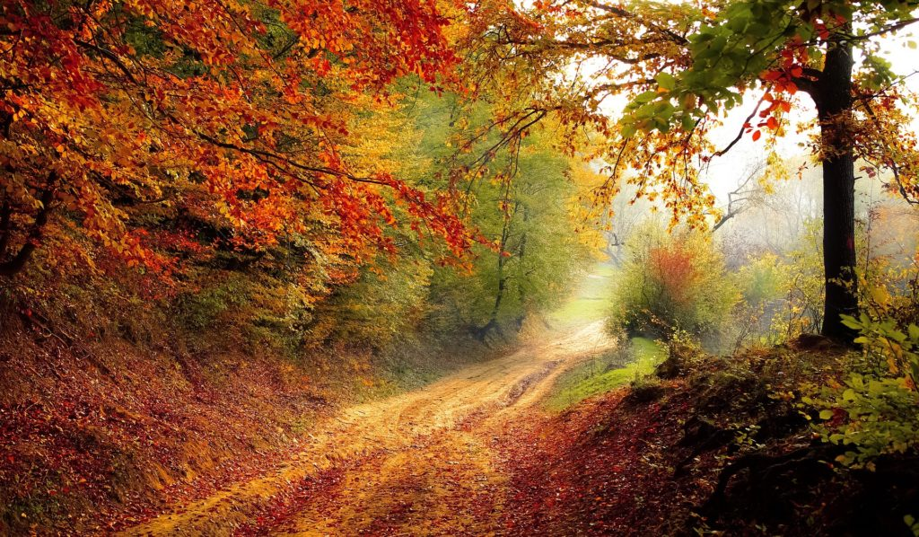 When You Need to Know God Knows_light shining on leafy path through fall-colored trees