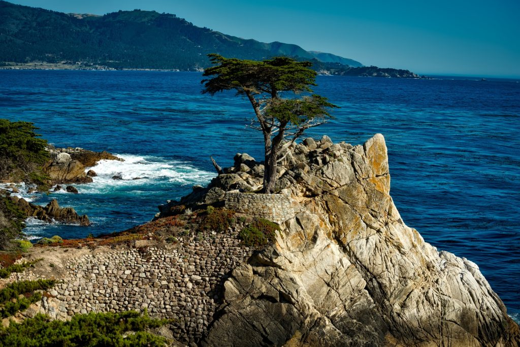 Deep blue ocean in background; in foreground, large rocky outcropping with cypress tree on top