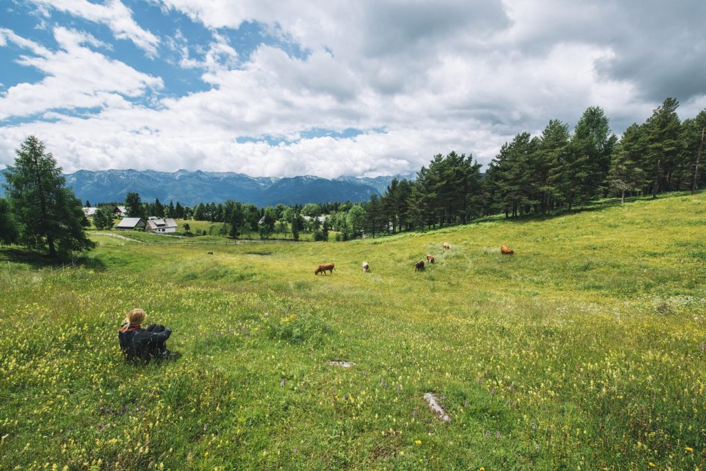 Woman sitting in grassy field, looking at green field, cows, trees, and mountains